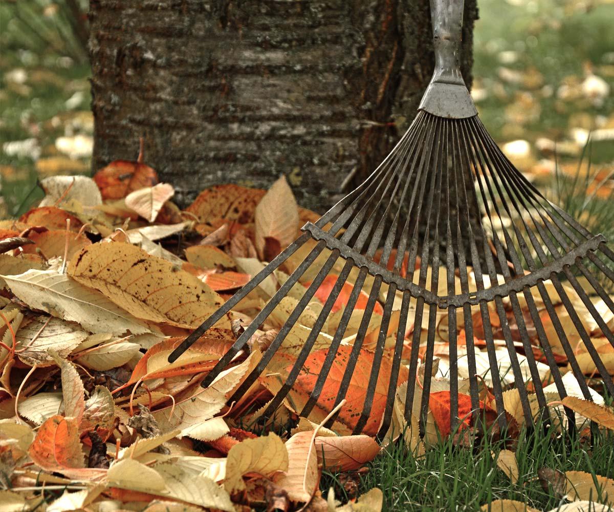 Suche liście w ogrodzie. Co z nimi zrobić?